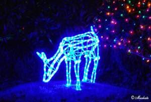 Светящийся олень - атрибут Рождества в США