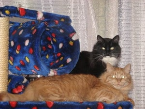 Сонни и Персик