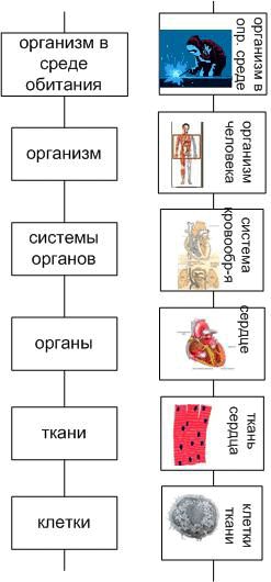 Рис. 3. Лифт организма человека