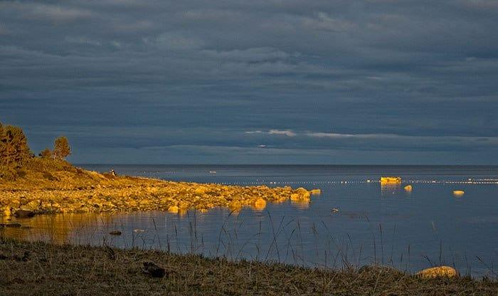 Поморское золото. Фото Дмитрия Горчева