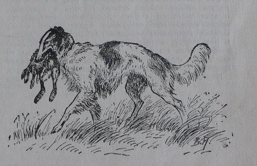 Mata haren.  Bild på Vera Amelung