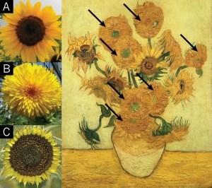 Ван Гог и мутация подсолнухов