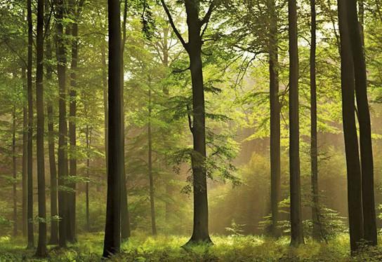 Леса Петрозаводска под угрозой уничтожения