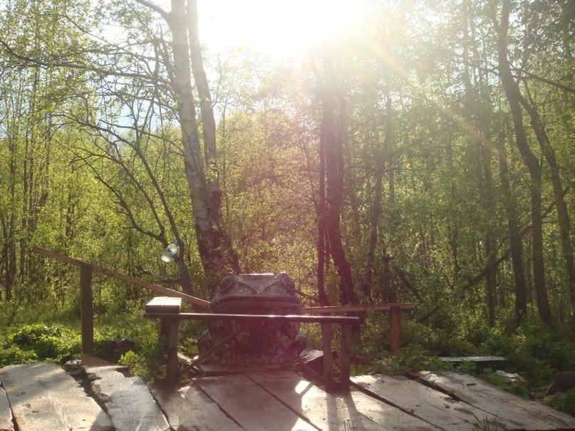 Горожане бьются за сохранение лесопарка «Лягушка»