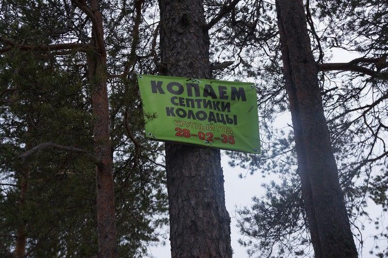 От кого страдают деревья?