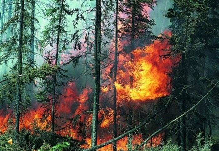 Изучаем лесные пожары