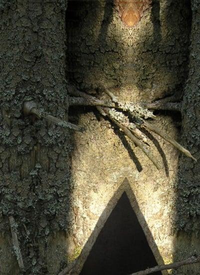 Из серии «Геометрия в природе». 2008