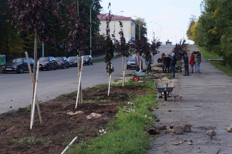 Вернёт ли Петрозаводск славу зелёного города?