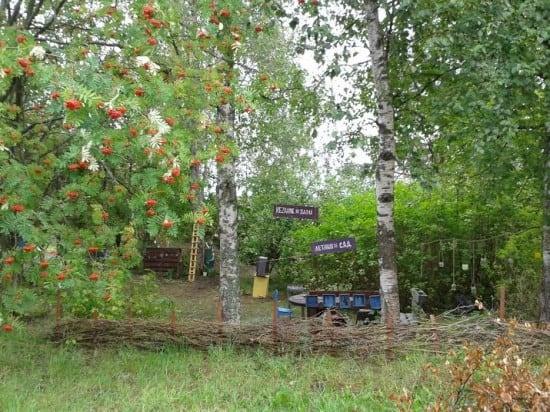 Летний сад Этнокультурного центра