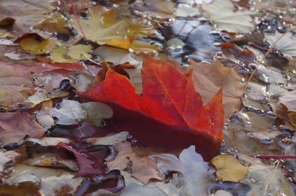 Осень. Фото Ирины Ларионовой