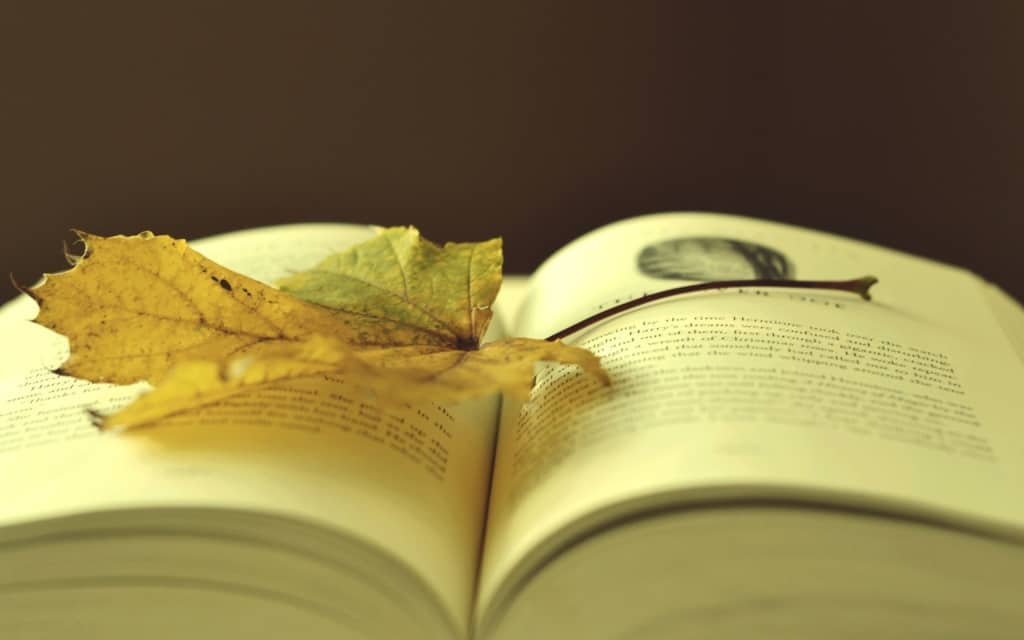 Что сейчас читают #Сенчин, #Потапова, #Носов и #Бояшов?