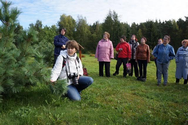 Арина Еглачева  рассказывает о низкорослой сосне