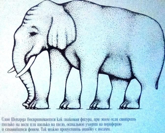 Где у слона ноги?