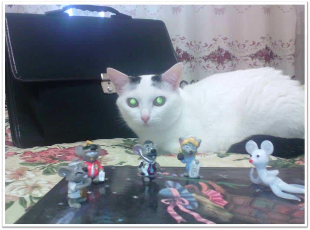 Тимур Хузиахметов. Мышка, которая ела кошек