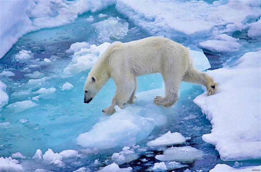 Фотовыставка «Русская Арктика - край света» в НМ РК