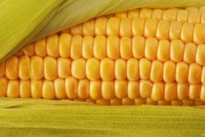 Вкусные и полезные ГМО