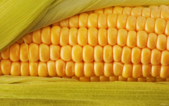 Кукуруза с ГМО