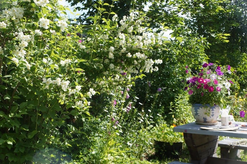 Лето на даче. Фото Ирины Ларионовой