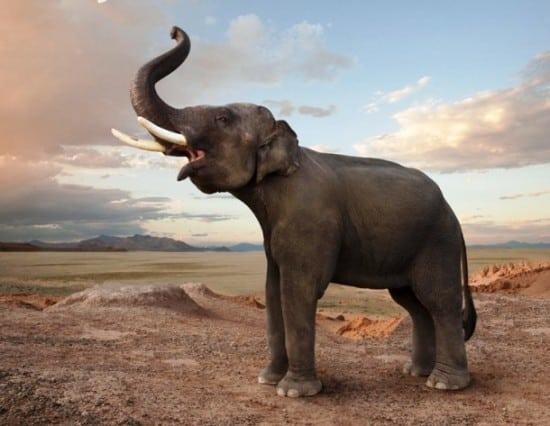 Генетическую историю слонов придется переписать