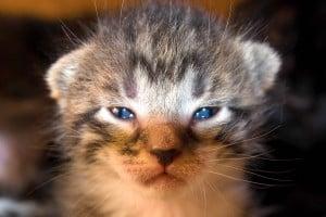 Кошки — соратники человека в опустошении природы