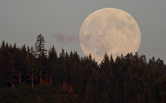 Sept. 22, 2010 - Roseburg, Oregon, U.S - The harvest moon rises from behind a ridge in rural Douglas County near Roseburg. The full moon nearest the autumnal equinox is known as the harvest moon. This year the event is being called the ''super harvest moon'' because the full moon coincides with the equinox which has not occurred for 20 years. (Credit Image: © Robin Loznak/ZUMApress.com)