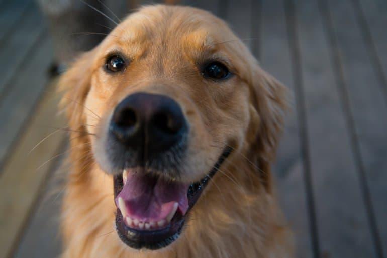 Собаки понимают смысл слов и интонаций
