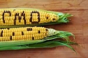 Правда о ГМО