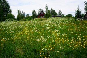 Лето в Карелии. Фото Ирины Ларионовой