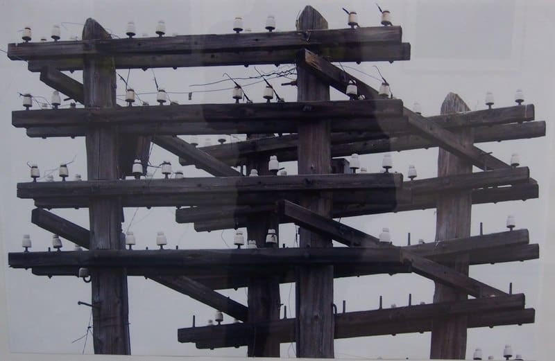Андрей Июдин. Много птиц