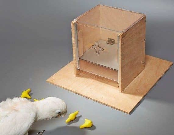 Какаду выбирает фигурку, подходящую под отверстие в крышке коробки.