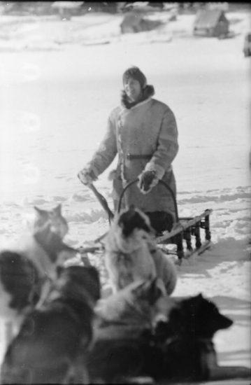 Дин Рид – гонка на собачьей упряжке. Фото Бориса Семенова