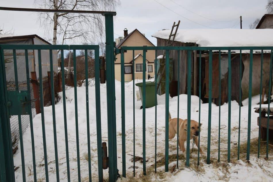 Дом, в котором живет Алёна и ее дети школьного возраста