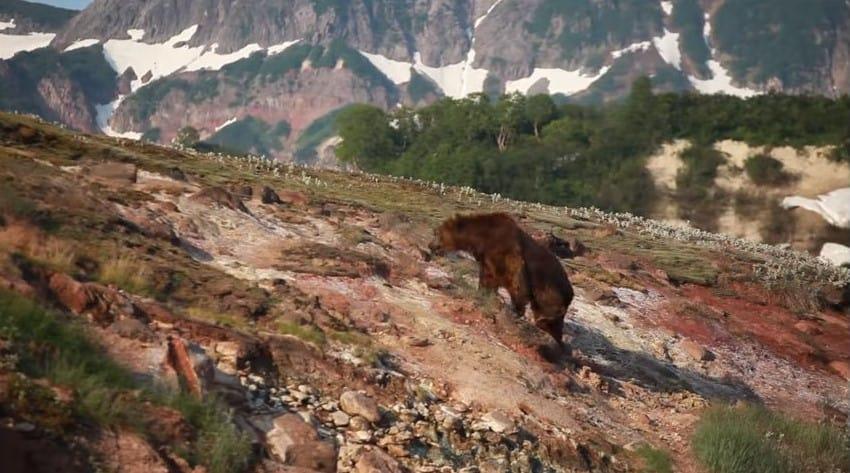 Кадр из фильма «Медведи Камчатки. Начало жизни»