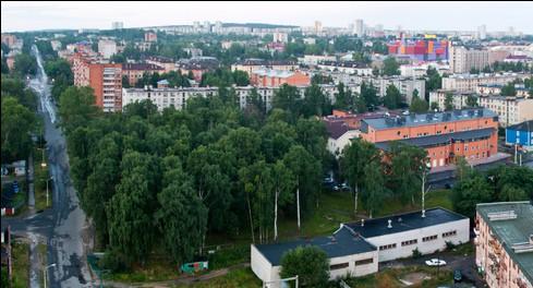 Березовая роща на Голиковке. Фото: Дмитрий Новицкий