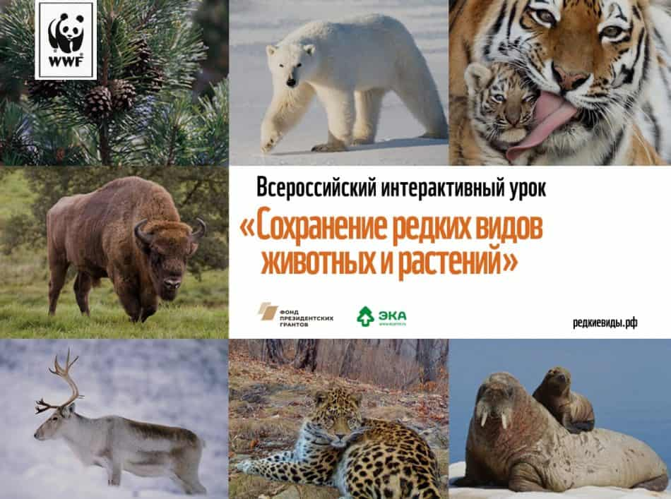 Учителей Карелии приглашают провести урок WWF о сохранении редких животных