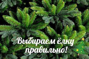 Топ-5 признаков правильной новогодней елки