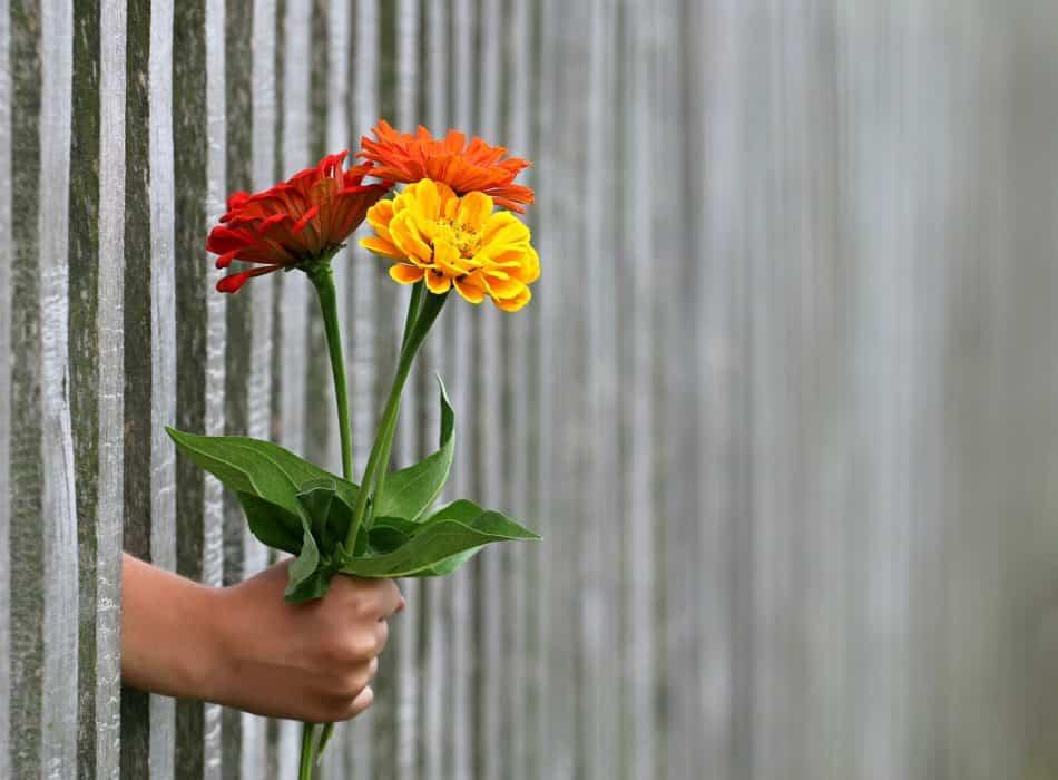 Фото: pedsovet.org