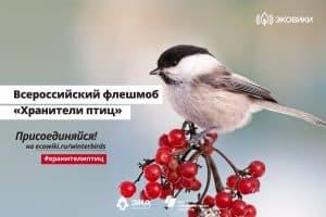 В Карелии стартует флешмоб «Хранители птиц»