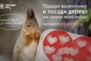 В Карелии стартует экоакция «Укорени свою любовь»