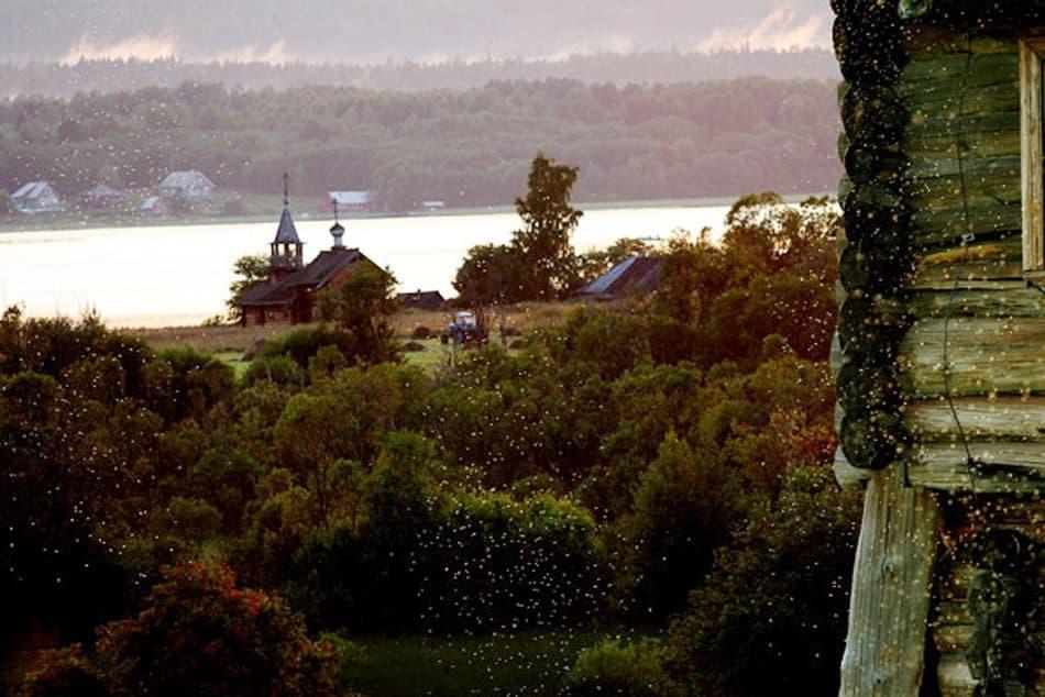 Деревенский летний пейзаж. Мошкара. Фото Олега Семененко