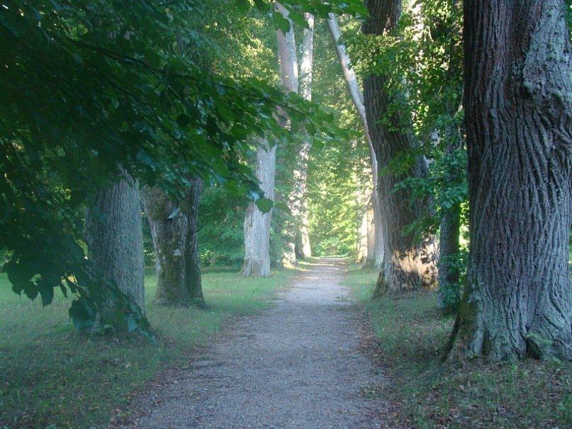 Аллея в Михайловском парке. Фото Ирины Ларионовой