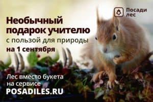 Стартовала всероссийская акция к 1 сентября «Лес вместо букета»