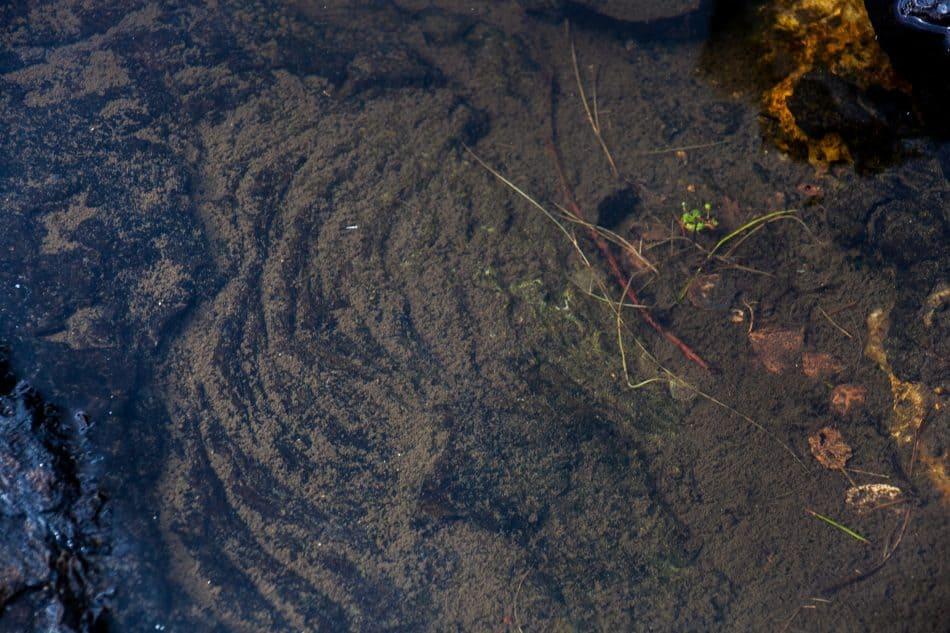 Вот, как выглядит «манная каша», застывшая в веках