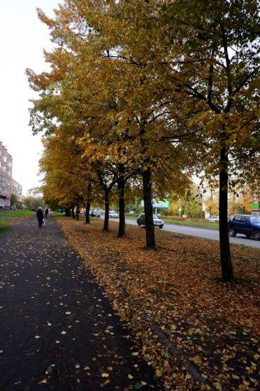 Петрозаводск, Октябрьский проспект. Фото Ирины Ларионовой