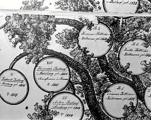 дерево Франциски Амелунг