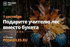 Лес вместо букета предлагают подарить учителям к 1 сентября экологи