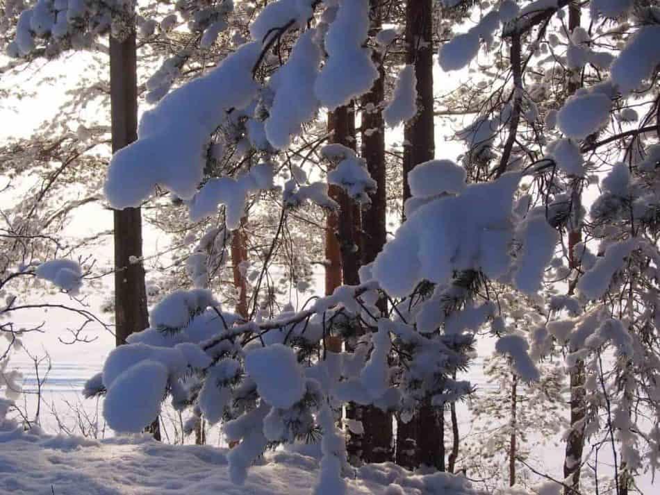 Всем хорошего отдыха! Фото Ирины Ларионовой