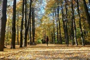 В петрозаводском парке Ямка. Фото Ирины Ларионовой
