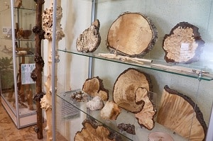 В Петрозаводске появится экологический музей