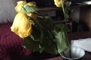 Как хороши, как свежи были розы. О русском генетическом коде